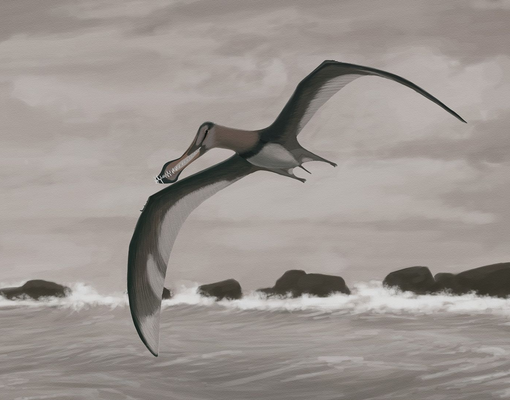 Artists reconstruction of a species of Siroccopteryx.