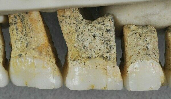 The researchers have found 13 bones, including teeth, belonging to the new species.  Photo via Callao Cave Archaeology Project