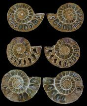 "1.5"" Jurassic Cut/Polished Ammonite Pairs - 5 Pairs"