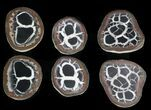 "1 1/4"" Cut and Polished Septarian Nodules - Photo 3"