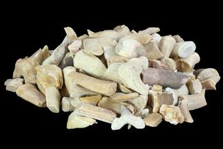 Wholesale Box: Fossil Fragments (Shark, Mosasaur, Plesiosaur) - 22 lbs