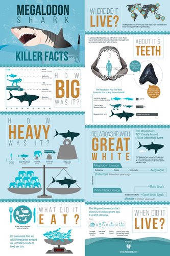 "24x36"" Megalodon Infographic Poster (Matte) - Photo 1"
