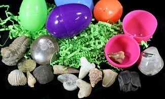 Fossil Filled Easter Eggs! - They're Back! For Sale, #23662