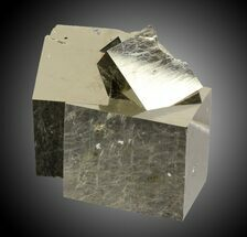 Pyrite - Fossils For Sale - #31005