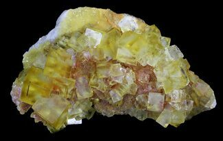 "Buy 4.6"" Lustrous, Yellow Cubic Fluorite Crystals - Morocco - #32302"