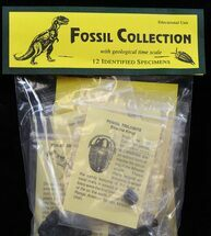 12 Specimen Fossil Collection - Educational Kit For Sale, #33248