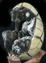 Septarian with Calcite & Barite - Fossils For Sale - #33504