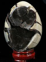 "Buy 4.8"" Septarian ""Dragon Egg"" Geode - Black Calcite Crystals - #33988"