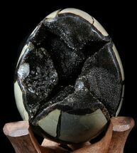 Septarian with Calcite & Barite - Fossils For Sale - #34707
