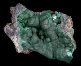 "3.6"" Dark Green Chrysocolla Crystals - Zaire For Sale, #35645"