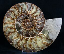 9 Inch Ammonite (Half) - Agate Preservation For Sale, #4109