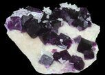 "3.7"" Dark Purple Cubic Fluorite on Quartz - Exceptional! - #39004-4"