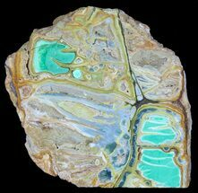 "Buy 4.1"" Slab Of Clay Canyon Variscite - Old Collection Stock - #39160"