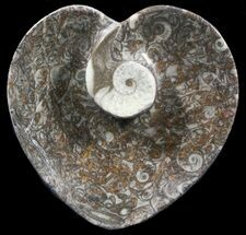 "4.5"" Heart Shaped Fossil Goniatite Dish For Sale, #39374"