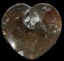 "Buy 4.5"" Heart Shaped Fossil Goniatite Dish - #39379"