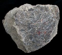 3 3/4 Lb. Red Agatized Dinosaur Bone - Lapidary Potential For Sale, #4138