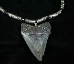 Fossil Jewelry For Sale
