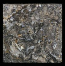 Various - Fossils For Sale - #40242