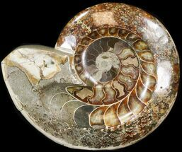 "Buy 9.2"" Wide Polished Ammonite 'Dish' - #41638"