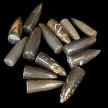 Bulk Polished Belemnites - 25 Pack For Sale, #42308