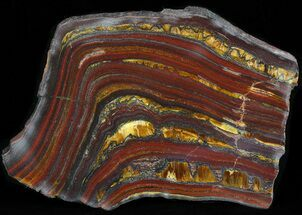 "Buy 3.4"" Polished Tiger Iron Stromatolite - (2.7 Billion Years) - #42604"