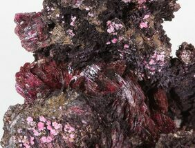 "1.7"" Magenta Erythrite Cystals on Matrix For Sale, #43178"