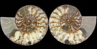 "Buy 8.1"" Cut & Polished Ammonite Pair - Agatized - #43639"