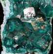 "2.3"" Gemmy Dioptase Cluster (Large Crystals) - Namibia - #44660-3"