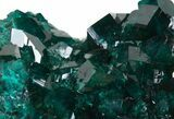 "Exceptional 2.6"" Gemmy Dioptase Cluster - Namibia  - #44661-4"