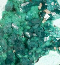 "Buy 2.19"" Gemmy Dioptase Cluster on Plancheite - Congo - #45298"