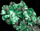 "4.3"" Silky Fibrous Malachite Crystal Cluster - Congo - #45327-2"