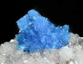 Buy Vibrant Blue Cavansite Cluster on Stilbite - India - #45874