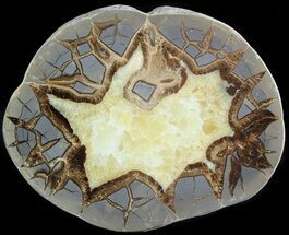 Septarian - Fossils For Sale - #45879