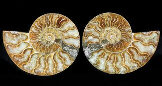 "Buy 3.7"" Sliced Fossil Ammonite Pair - Agatized - #46507"