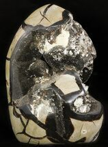 Septarian with barite - Fossils For Sale - #47469
