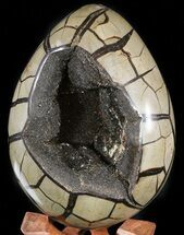"6.2"" Septarian ""Dragon Egg"" Geode - Black Crystals For Sale, #47477"