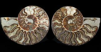"6.4"" Cut/Polished Ammonite Pair - Agatized For Sale, #47687"