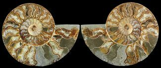 "5.6"" Cut & Polished Ammonite Pair - Agatized For Sale, #47720"