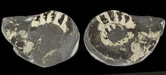 "Buy 1.3"" Pyritized Ammonite Fossil Pair - #48058"