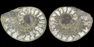 Unidentified - Fossils For Sale - #48060