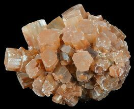 Aragonite - Fossils For Sale - #49299