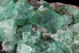 "Gorgeous 8.2"" Fluorite & Galena Plate -  Rogerley Mine - #32398-4"