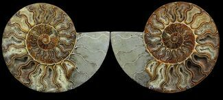 "Buy 7.2"" Cut & Polished Ammonite Pair - Agatized - #49912"