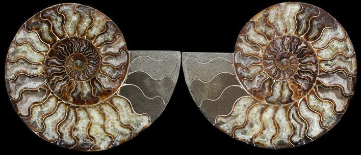 "7.8"" Cut & Polished Ammonite Pair - Agatized"