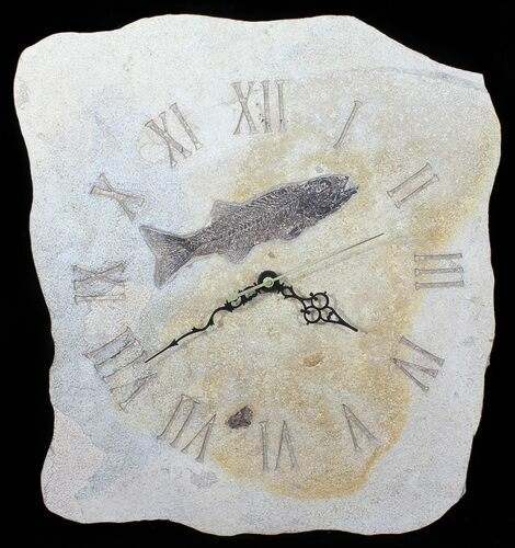 "14"" Tall Clock With Mioplosus Fish Fossil - Wyoming"