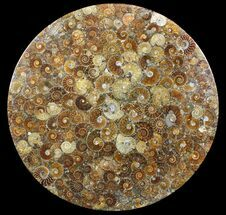 "12"" Plate Made Of Agatized Ammonite Fossils For Sale, #51050"