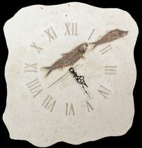 "17"" Tall Clock With Two Knightia Fish Fossils - Wyoming For Sale, #51437"
