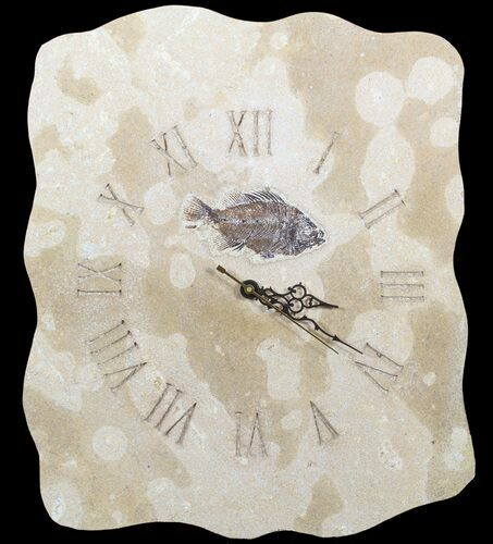 "17"" Tall Clock With Cockerellites Fish Fossil - Wyoming"