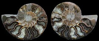 "4.7"" Polished Ammonite Pair - Agatized For Sale, #51746"