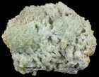 "4.5"" Green Prehnite Crystal Cluster - Morocco - #52281-1"